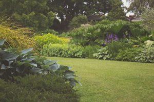 verrassende toepassingen thee tuin