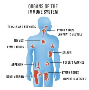 immuunstelsel versterken