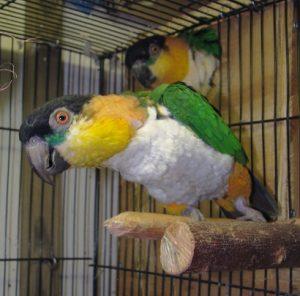 tips huisdieren beschermen vuurwerk vogels