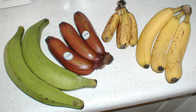 tropische vruchten banaan soorten