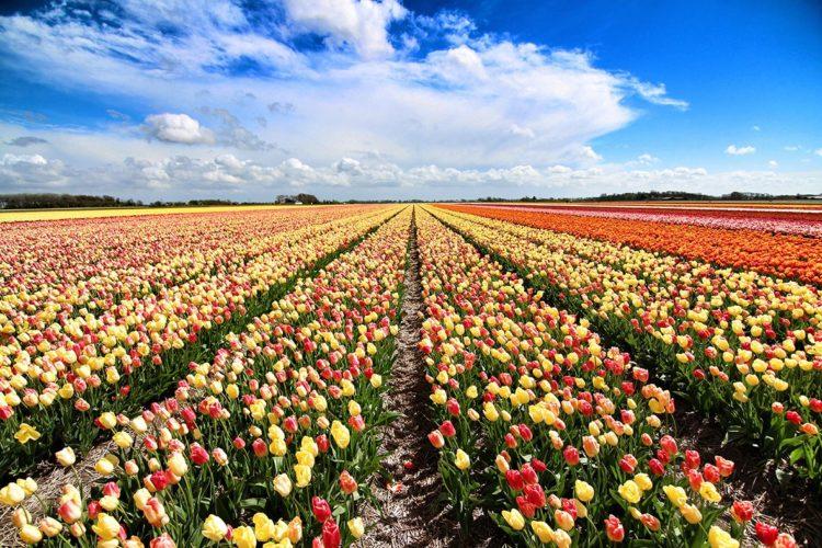 weekendtips april bloemendagen anna paulowna