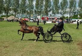 weekendtips mei dag aangespannen paard
