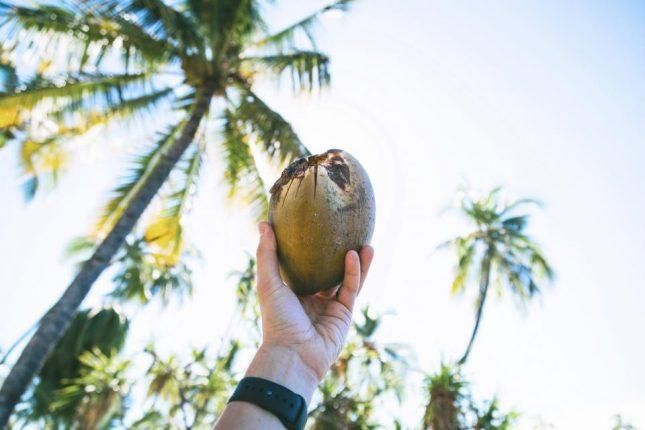kokosnoot veelzijdig voor gezondheid