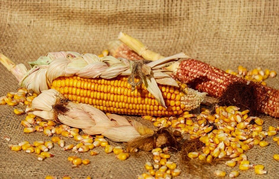 tips droogbloemen zelf maken mais