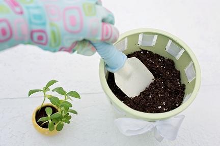 10-tips-voor-het-verzorgen-van-je-kamerplanten-ompotten