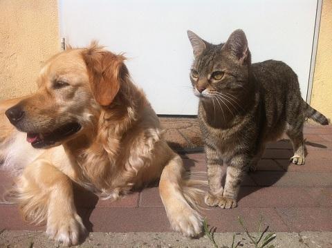 tips huisdieren beschermen vuurwerk
