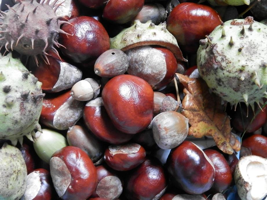 herfst knutselen kastanjes eikels denneappels