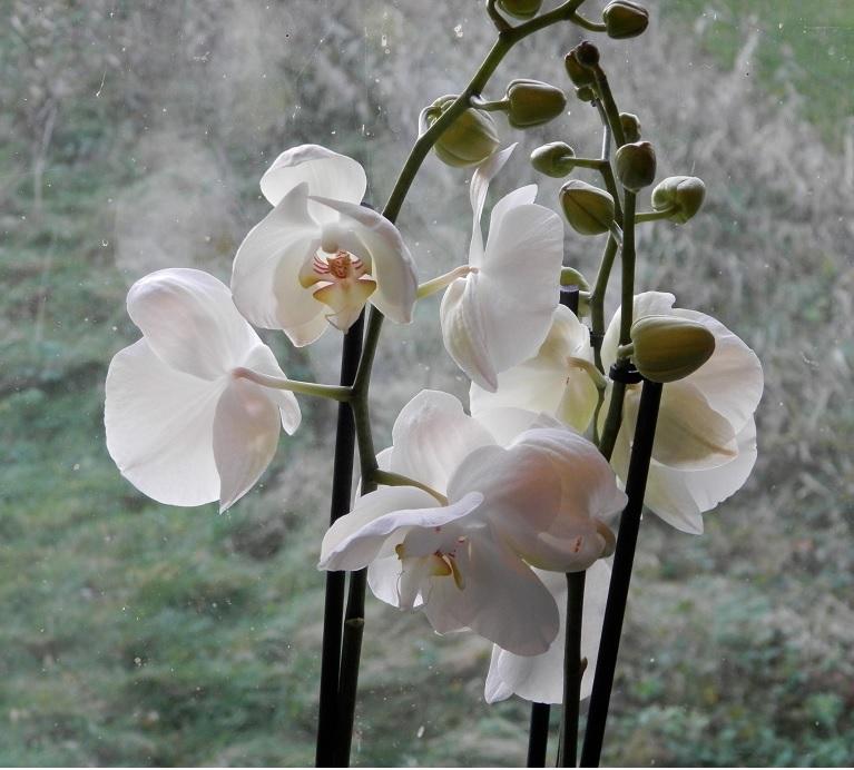 review kerstpaket orchidee het beste van de kweker close up