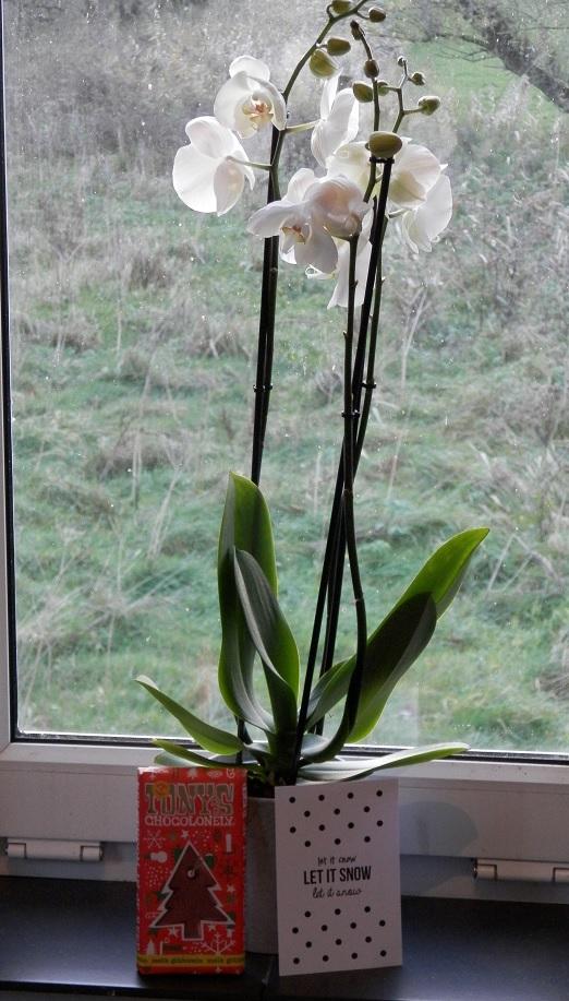 review kerstpakket orchidee het beste van de kweker