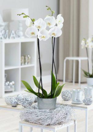 maak kans op kerstpakket orchidee