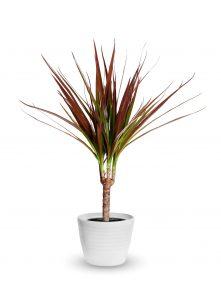welke planten zijn geschikt voor de badkamer 4