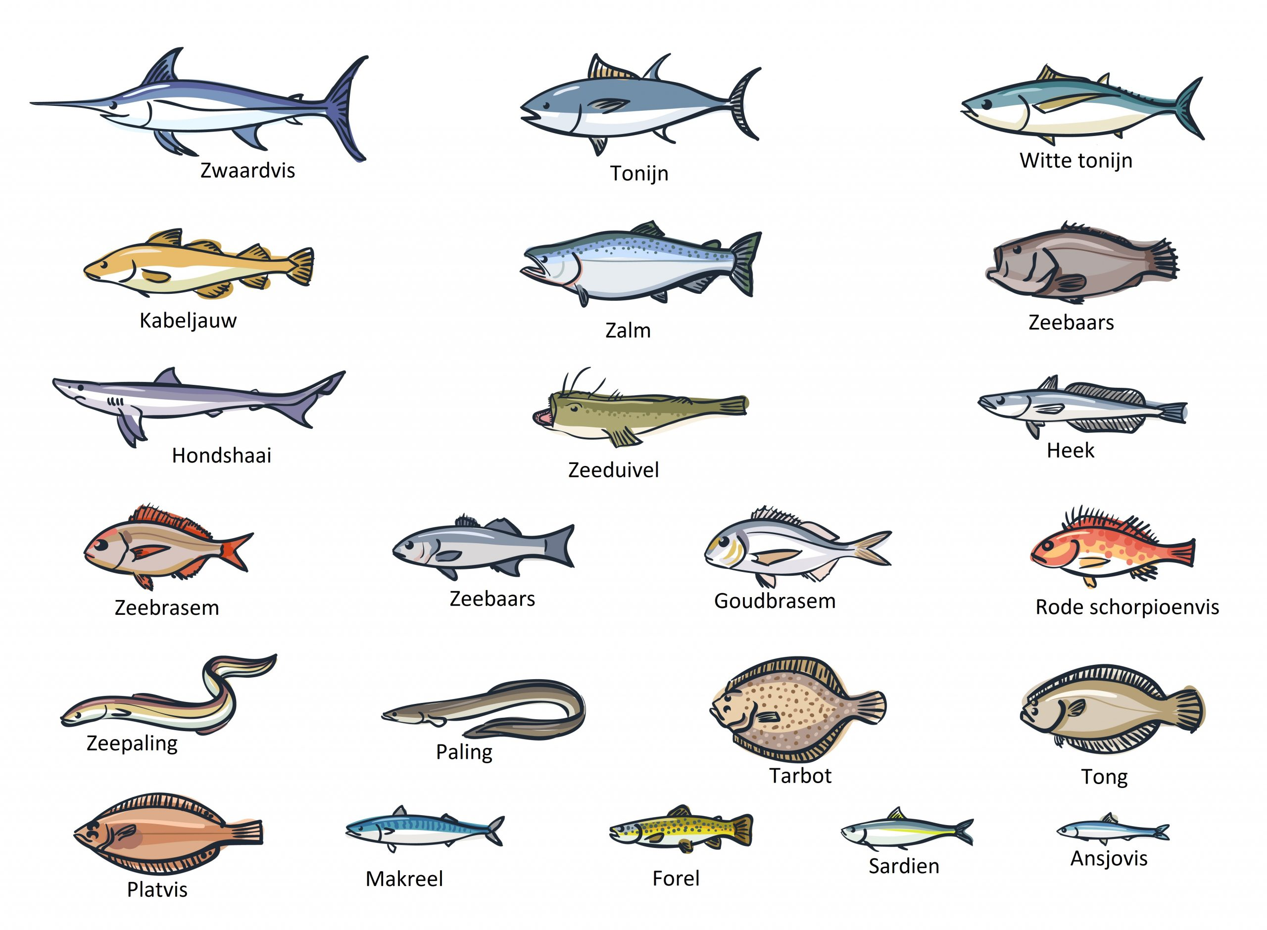 vis schaal en schelpdieren bereiden