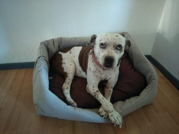 Comfortabele en handgemaakte hondenmanden van Suzy's