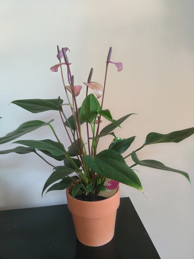 Meer groen met Fair Flora eerlijke bloemen en planten 4