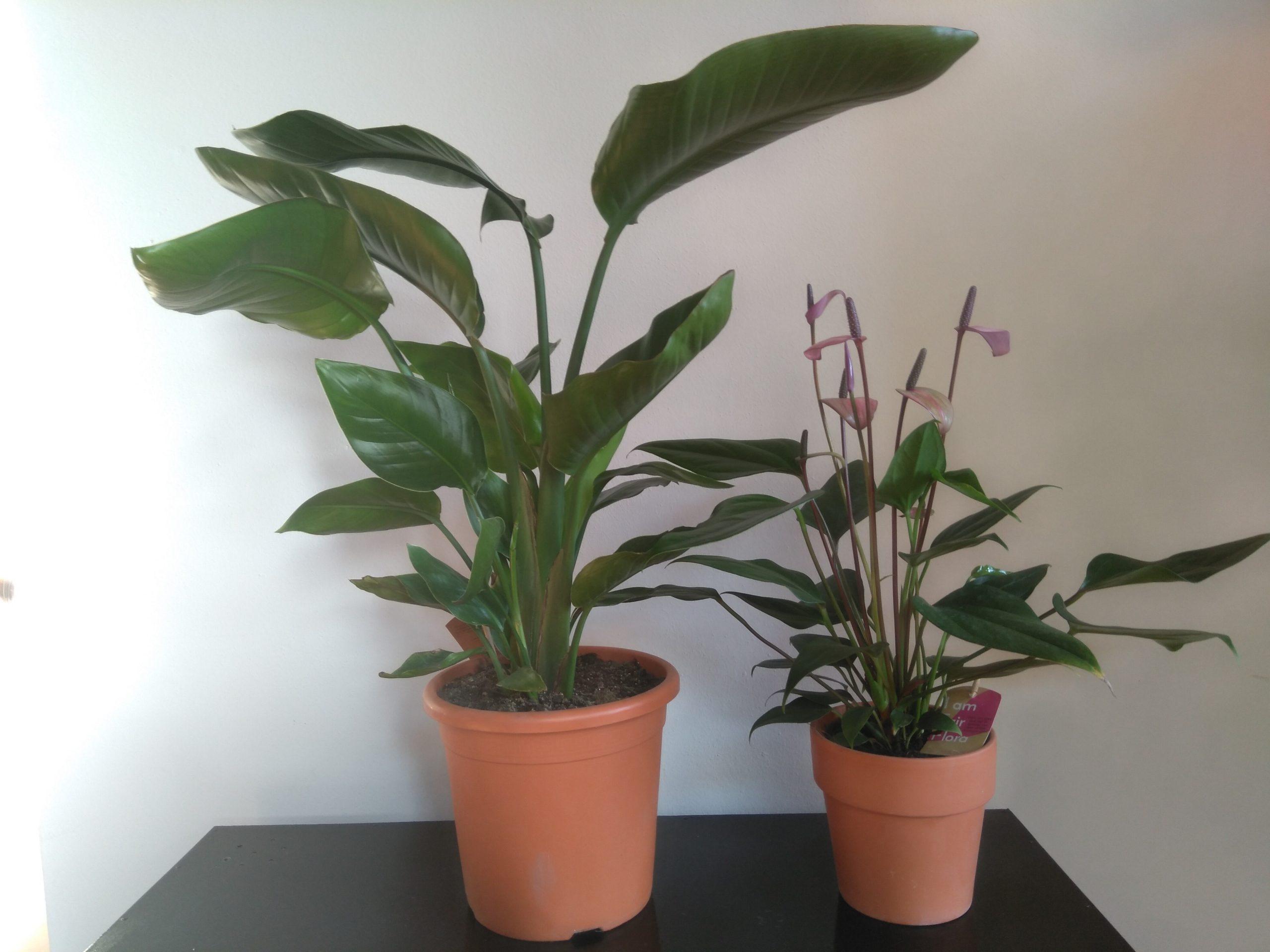 Meer groen met Fair Flora eerlijke bloemen en planten