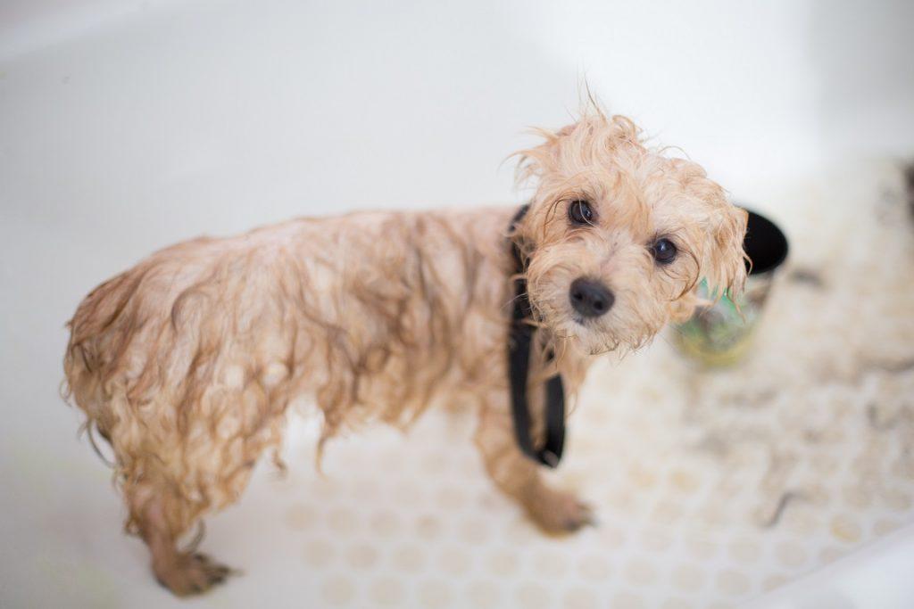 DIY shampoo voor honden 1