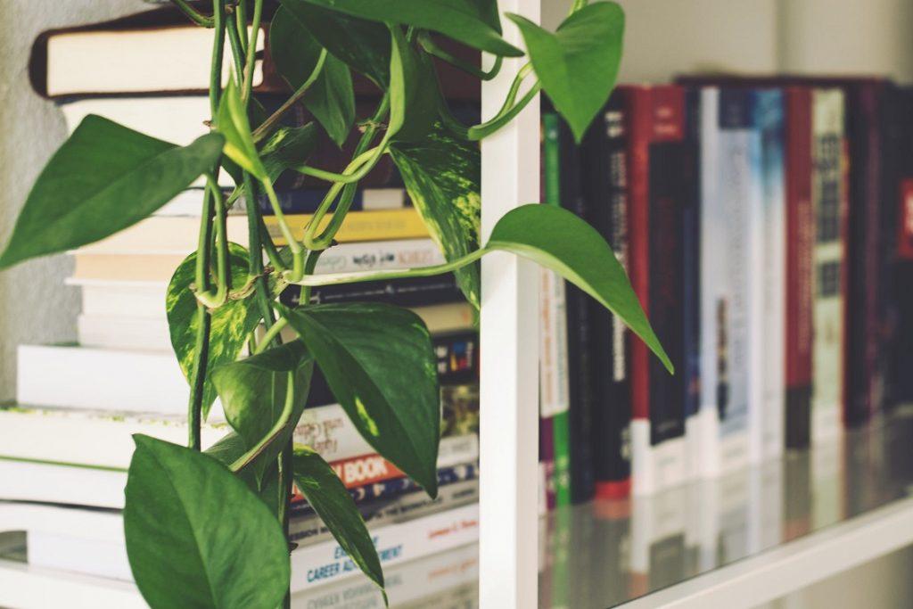 Tips om je woning zomerklaar te maken 1