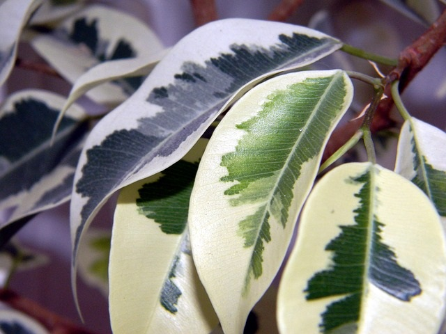 5 Kamerplanten die allergische reacties kunnen veroorzaken 1
