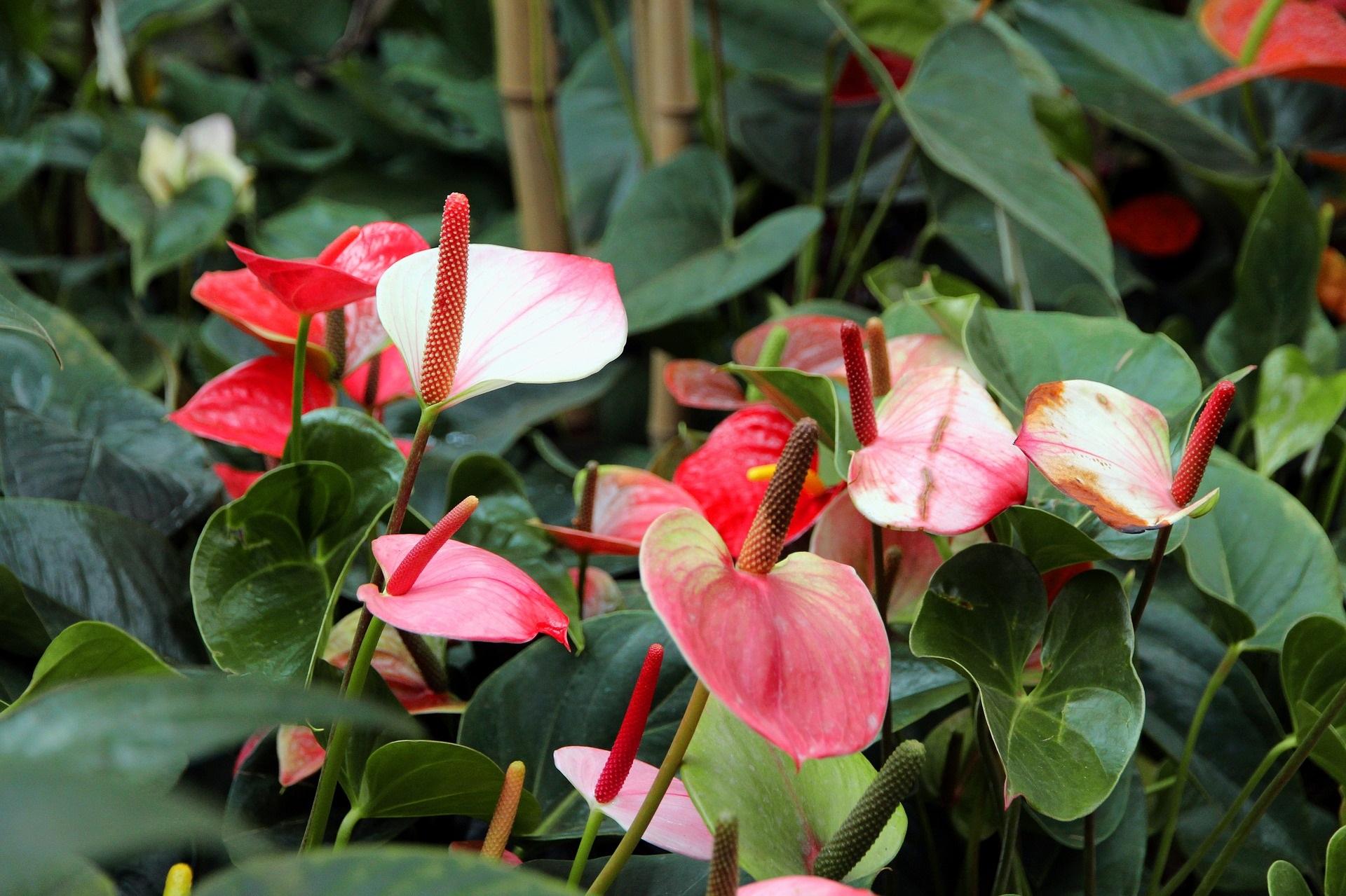5 Kamerplanten die allergische reacties kunnen veroorzaken