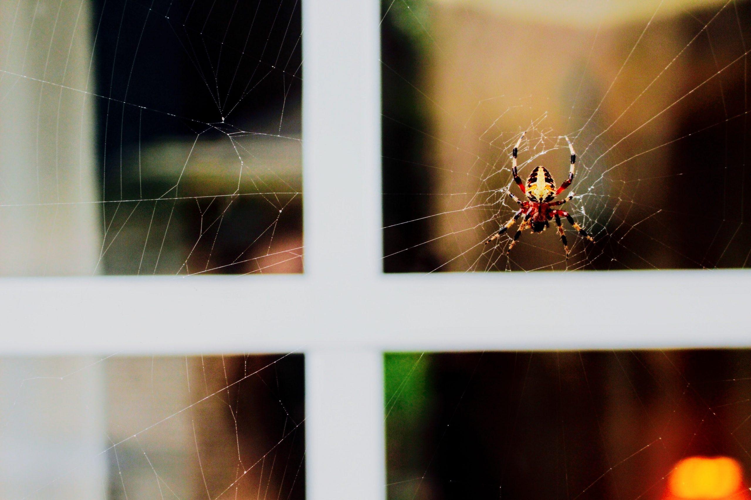 Met deze tips voorkom je spinnen en insecten in huis