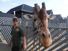 De grootste dierentuinen ter wereld op een rijtje