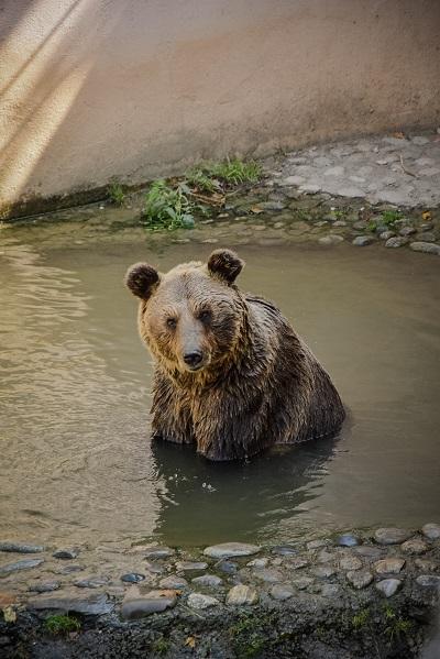 De grootste dierentuinen ter wereld op een rijtje beer