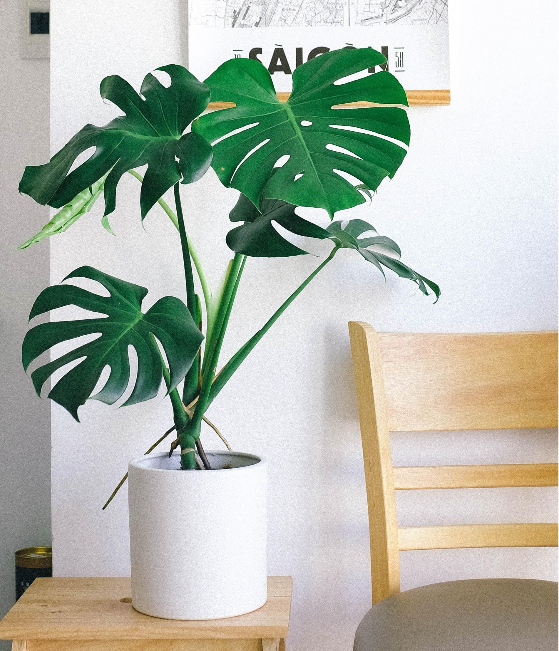 Deze 12 planten hebben weinig licht nodig