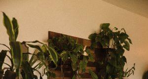 Deze planten hebben weinig licht nodig donker hoekje