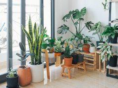 Tips en trucs verzorging kamer- en tuinplanten tijdens vakantie