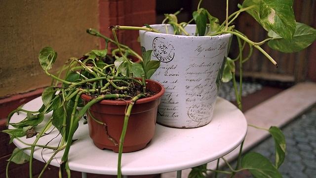 Tips en trucs verzorging kamer- en tuinplanten tijdens vakantie planten