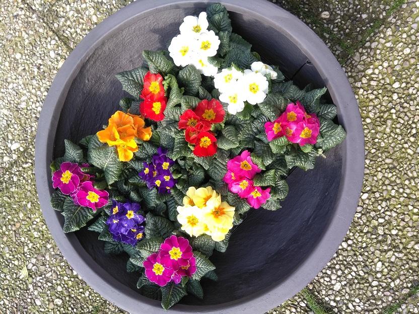 Bloempotten en plantenbakken als blikvanger in huis, tuin en op kantoor schalen bovenaanzicht