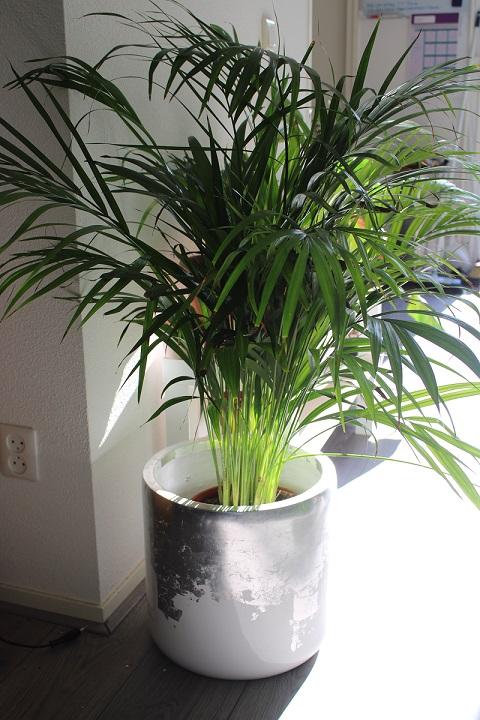 Bloempotten en plantenbakken als blikvanger in huis, tuin en op kantoor palm