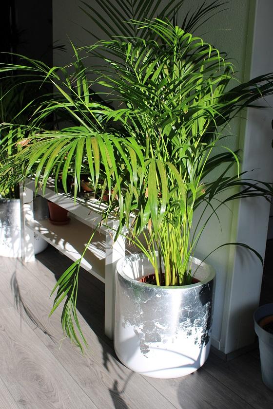 Bloempotten en plantenbakken als blikvanger in huis, tuin en op kantoor palmboom