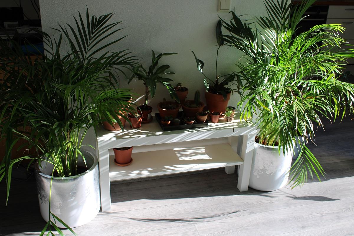 Bloempotten en plantenbakken als blikvanger in huis, tuin en op kantoor palmen