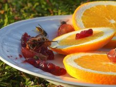 6 Manieren om makkelijk en snel van wespen af te komen