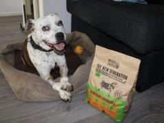 Bugs for pets duurzaam en gezond hondevoer met insecten