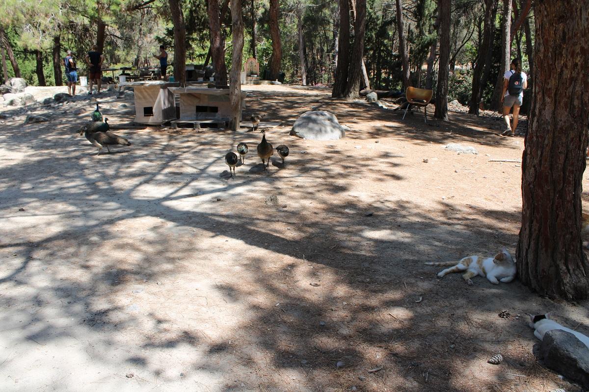 bezienswaardigheden Kos Blaka forest pauw en kat