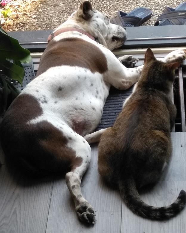 10 Dingen waar katten absoluut niet van houden kat en hond