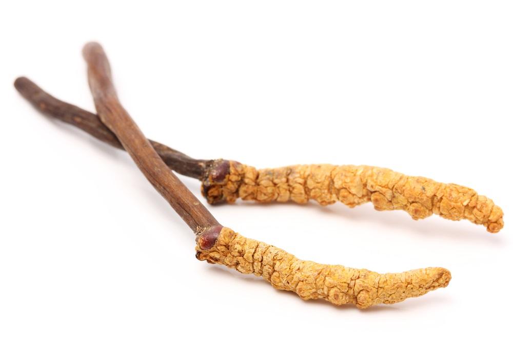 De nieuwste gezondheidstip Cordyceps paddenstoelen close up