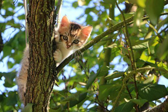 10 Dingen die gevaarlijk zijn voor je kat