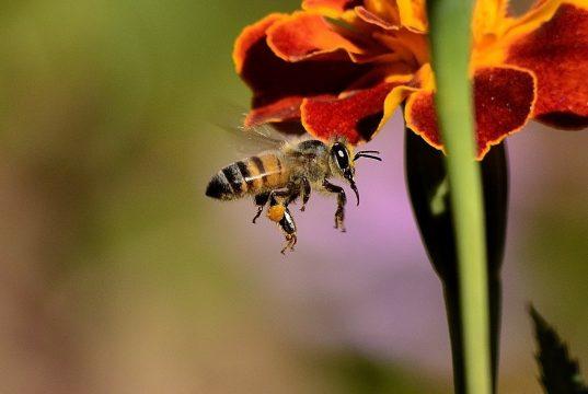 Red de bijen met bloemen en planten op je balkon