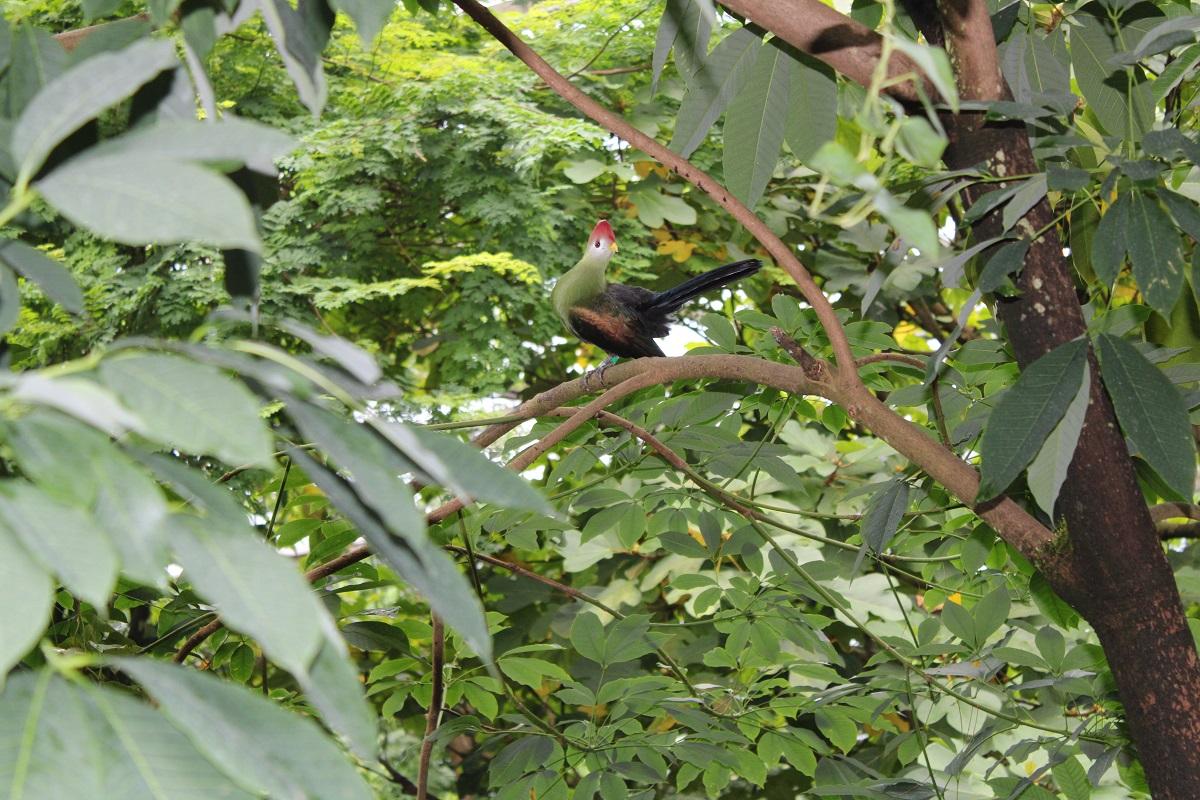 Burgers' Zoo Camp overnachten in de dierentuin aparte vogel bush