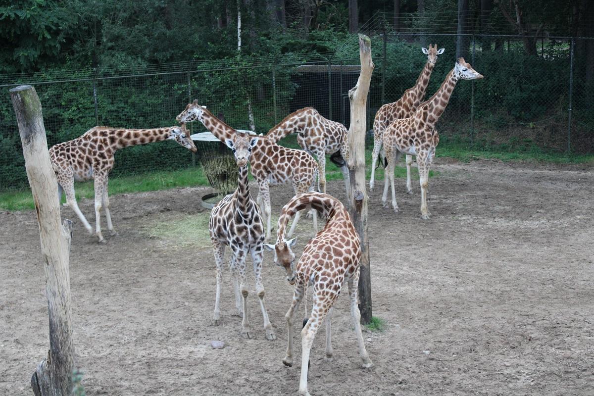 Burgers' Zoo Camp overnachten in de dierentuin avondwandeling