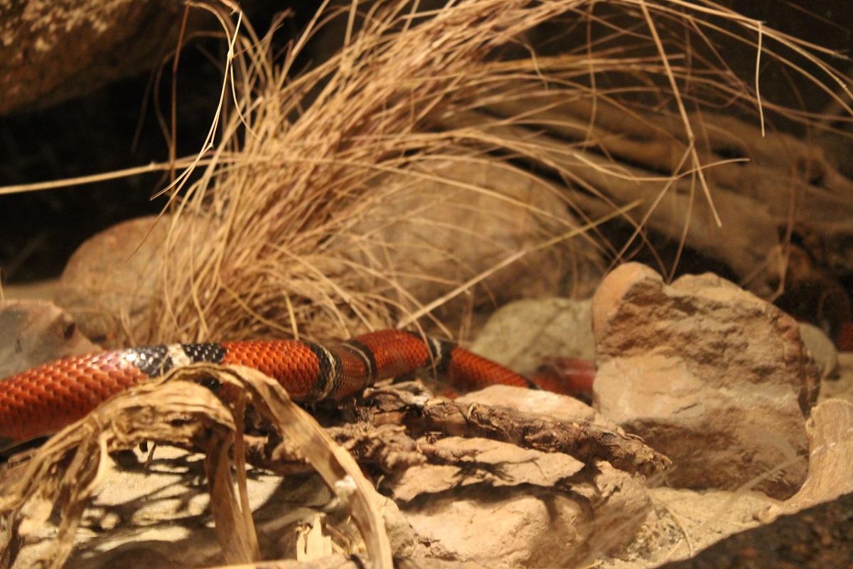 Burgers' Zoo Camp overnachten in de dierentuin niet giftige slang