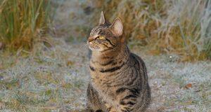 Alles wat je moet weten over blaasgruis bij katten