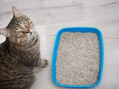 Dit moet je doen als je kat de kattenbak NIET gebruikt